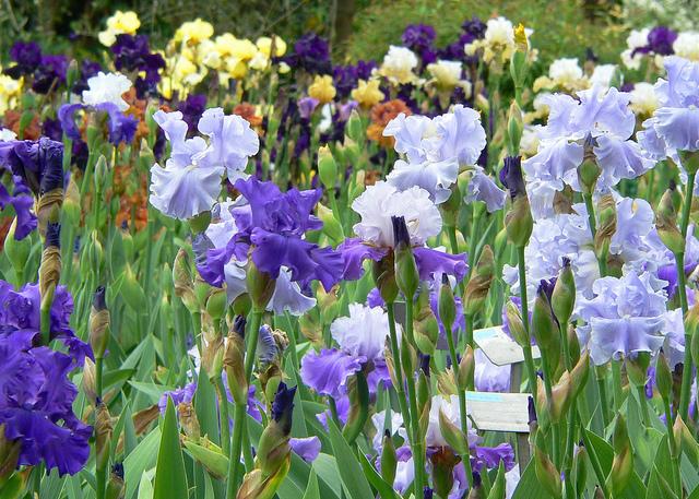 Firenze - Giardino degli Iris 3