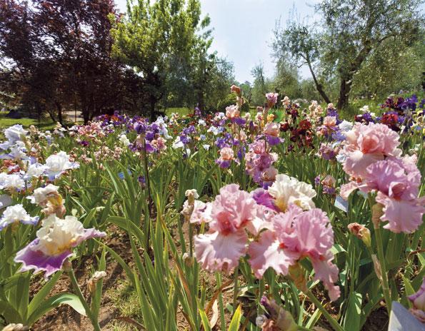 Firenze visita al giardino dell iris al piazzale - Giardino dell iris firenze ...